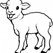 Baby Born Sheep Coloring Page