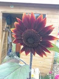 22 best Allotment & cut flower patch images on Pinterest