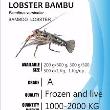 Mini Decorative Lobster Trap by Bamboo Lobster Bamboo Lobster Suppliers And Manufacturers At