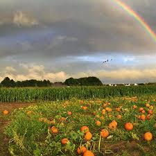 Pumpkin Picking Riverhead by Where To Go Pumpkin Picking Near The Hamptons