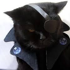 cat batman costume 30 cat costumes that are costume wall
