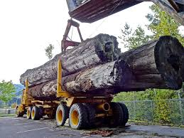 100 Truck Lenders Usa Forestry Equipment Financing First Capital Business Financing USA