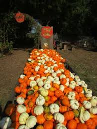 Pumpkin Patch Edmond Oklahoma by Brown Ranch Hay Maze Ardmore Oklahoma Visit Oklahoma U0027s Largest