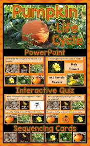 Life Cycle Of A Pumpkin Seed Worksheet by Best 10 Product Life Cycle Stages Ideas On Pinterest Spring