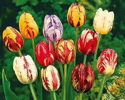 Fleur à Gommettes Coloriage Motricite Fine Preschool Art