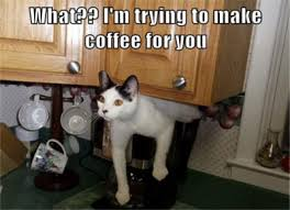cat coffee national coffee day daily dose of dogs aka cats with your coffee