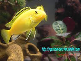 poisson eau douce aquarium tropical photos aquarium site de poisson tropicaux d