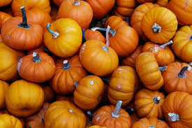 Southern Illinois Pumpkin Patches by 10 Best Pumpkin Patches In The Inland Empire K Frog 95 1 Fm And