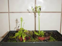 led plant lighting calling all photons