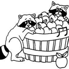 Apple Basket Two Racoons Eat From Coloring Pages