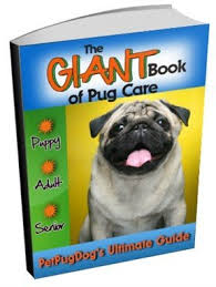 My Dog Stinks And Sheds A Lot by Pug Dog Smells And Bad Odors