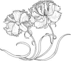 Carnation Flower The Heavenly Coloring Page