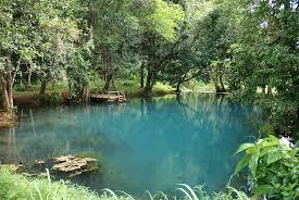 piscine naturelle prix 12 se baigner dans sa 28 08 2009 ladepeche
