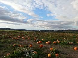 Pumpkin Patch Corn Maze Snohomish Wa by Pumpkin Patch Stocker Farm Snohomish Wa Hello27 Net