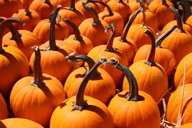 Oak Glen Pumpkin Patch Address by Pumpkin Patch Home Facebook