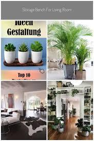 lebende pflanze moderne lebende pflanze pflegeleicht viele