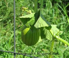 Eden Pumpkin Seeds by The Gardener Of Eden The State Of The Plots Part 1