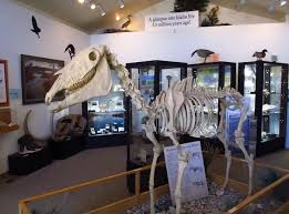 hagerman fossil beds trace evolution tour