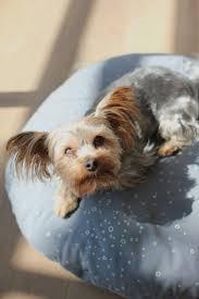 Harry Barker Dog Bed by 54 Best Awesome Dog Beds Images On Pinterest Dog Beds Animals