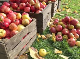 Best Apple Hill Pumpkin Patch by Fall Events At Apple Hill Farms