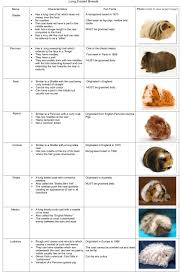 Can Guinea Pigs Eat Pumpkin Seeds by Image Result For Guinea Pig Food List Printable Best Guinea Pig