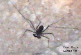 Remains Of The Day Spiders by Whips In Xibalba Whip Spiders Amblypygi U2014 Bug Of The Week