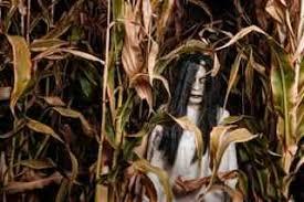 Pumpkin Patch Sauvie Island Corn Maze by Kruger U0027s Farm Home Facebook