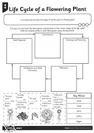 Adapting Plant Life Cycle Worksheet For Students Who Are Blind Or Biology Coloring Pages