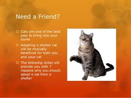 adopt a cat 7 reasons to adopt a cat from a shelter
