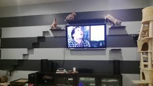 cat stairs every cat should their own cat stairs cats