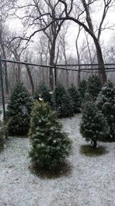 Christmas Tree Farm Lincoln Ne by Walnut Grove Tree Farm Family Owned