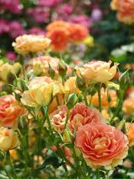 flowers beste blumen topfblumen schöne blumen
