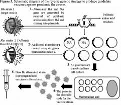 Asymptomatic Viral Shedding Influenza by H5n1 Avian Influenza Virus An Overview
