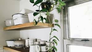 Best Plant For Bathroom by Best Office Plants Nz 7 Office Plants You Wonu0027t Kill