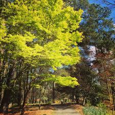 Georgia s Little Piece of Heaven Callaway Gardens Atlanta Magazine