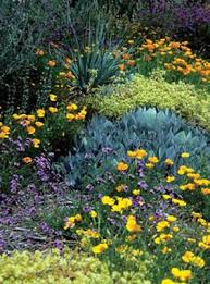 Why Garden with Native Plants & How to Find Native Plants From