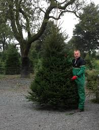6ft Christmas Tree Asda by Supreme Norway Spruce To Choose From The Farm The Christmas Tree
