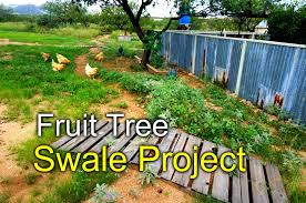 Rainwater Swale For Fruit Trees - Desert Permaculture - YouTube Thriving Backyard Food Forest 5th Year Suburban Permaculture Bill Mollison Father Of Gaenerd 101 Pri Cold Climate Archives Chickweed Patch Garden Design With Permaculture Kitchen Herb Spiral Backyard Orchard For The Yards Pinterest Orchards Australian House Garden January 2017 Archology Download Design And Ideas Gurdjieffouspenskycom Sustainable Farm Future Best 25 Ideas On Vegetable Youtube