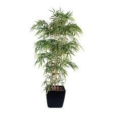 bambou nain en pot 28 images comment planter des bambous dans