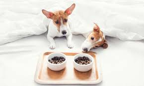 Pampered Pets Bed And Biscuit by Bed And Biscuits Dog Training In Bahrain Pet Foods