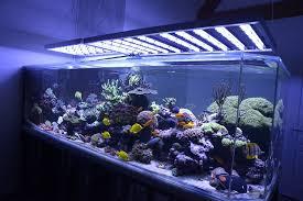 eclairage led pour aquarium eau de mer faq reponses aux questions frequentes sur les eclairages led alpheus