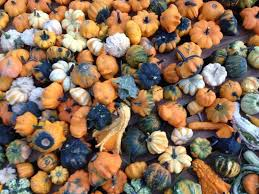 Best Pumpkin Patch Austin Texas by Best 25 Pumpkin Patch San Antonio Ideas On Pinterest San