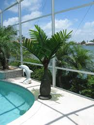 6' LED Lighted Bottle Palm Tree. Great For Your Deck, Porch ... Front Yard Landscaping With Palm Trees Faba Amys Office Photo Page Hgtv Design Ideas Backyard Designs Wood Above Concrete Wall And Outdoor Garden Exciting Tropical Pools Small Green Grasses Maintenance Backyards Cozy Plant Of The Week Florida Cstruction Landscape Palm Trees In Landscape Bing Images Horticulturejardinage Tree Types And Pictures From Of Houston Planting Sylvester Date Our Red Ostelinda Southern California History Species Guide Install