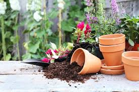 Rustic Table With Flower Pots Potting Soil Trowel And Plants In Front Of An