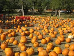 Lane Farms Pumpkin Patch by October 2014 Walk Down The Lane