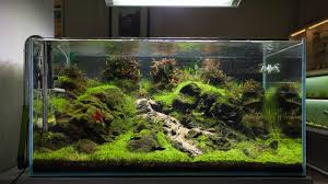 90x60x45] Tank Aquascape In The Living Room ... #peha68 .. Shared ... Aquascaping Aquarium Ideas From Aquatics Live 2012 Part 2 Youtube How To Make Trees In Planted Aquarium The Nature Style Planted Tank Awards Ultimate Shop In Raipur Fuckyeahaquascaping My 90p Tank One Month See Day 1 Here Best 25 Ideas On Pinterest Home Design Designs Aquascape Happy Journey By Adil Chaouki 1ft Cube Aquascaping Fuck Yeah Anyone Do For Your Fish Srt Hellcat Forum Archives Javidecor