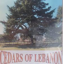 100 Trucks And More Augusta Ga Cedars Of Lebanon 18 Photos 6 Reviews Mediterranean Restaurant