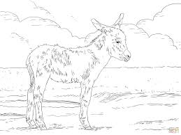 Click The Three Weeks Old Donkey Foal Coloring Pages