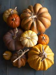 Types Of Pumpkins For Baking by Best 25 Pumpkin Varieties Ideas On Pinterest Pumpkin Growing
