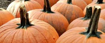 Pumpkin Patch Hayrides Lancaster Pa by A Guide And Map To Massachusetts U0027 Best Pumpkin Patches And Pyo